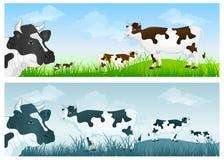 Mucca sul prato Immagine Stock Libera da Diritti