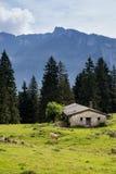 Mucca sul prato vicino al granaio, alpi europee Fotografie Stock Libere da Diritti