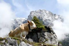 Mucca sulla montagna nebbiosa Immagini Stock
