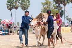 Mucca tailandese nel festival di corsa del carrello della mucca Fotografie Stock