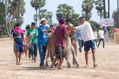 Mucca tailandese nel festival di corsa del carrello della mucca Fotografia Stock Libera da Diritti