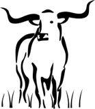 Mucca texana che si leva in piedi nell'erba Fotografia Stock