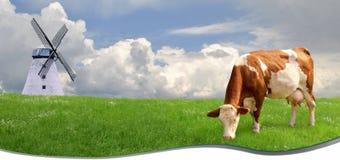 Mucca in un prato di estate Fotografie Stock
