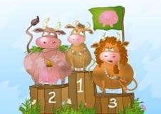 Mucche alla concorrenza di bellezza Fotografia Stock
