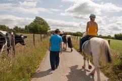 Mucche & cavalli immagini stock