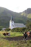 Mucche che affrontano la chiesa di Varlberg Fotografia Stock