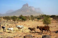 Mucche che camminano davanti alle montagne Immagine Stock Libera da Diritti