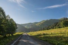 Mucche che camminano lungo la strada nelle montagne Fotografia Stock