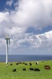 Mucche che pascono fra le turbine di vento Fotografie Stock Libere da Diritti