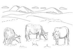 Mucche che pascono sul prato Immagine Stock
