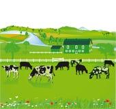 Mucche che pascono in un campo Immagini Stock Libere da Diritti