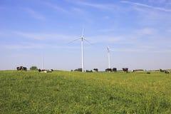 Mucche che pascono vicino ai generatori eolici Fotografie Stock Libere da Diritti