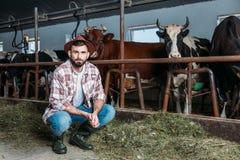 Mucche d'alimentazione dell'agricoltore maschio Fotografie Stock Libere da Diritti