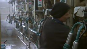 Mucche da latte in un'azienda agricola archivi video