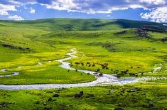 Mucche della valle Fotografia Stock Libera da Diritti
