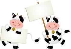 Mucche delle coppie con le insegne Immagine Stock