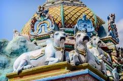 mucche Dettaglio del tempio di Kapaleeswarar dell'indiano Fotografie Stock