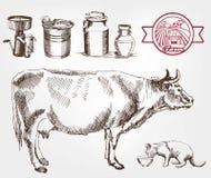 Mucche di allevamento Immagini Stock Libere da Diritti