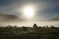 mucche di buongiorno! Fotografia Stock