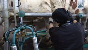 Mucche di mungitura nell'azienda agricola video d archivio