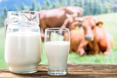 Mucche e latte nel vetro Fotografie Stock