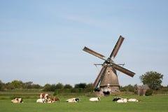Mucche e mulino a vento Fotografia Stock