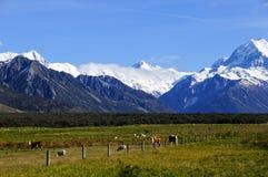 Mucche e pecore che pascono fotografia stock