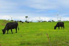 Mucche e turbine di vento Immagine Stock Libera da Diritti