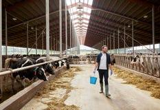 Mucche ed uomo con il secchio di fieno che cammina all'azienda agricola Immagini Stock