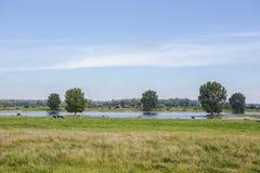 Mucche frisoni degli Holstein olandesi tipici in pascolo verde con un fiume in Olanda immagini stock