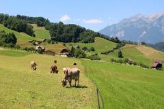 Mucche nel pascolo delle alpi Fotografie Stock