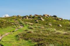 Mucche sopra il tor di Higger, South Yorkshire, Inghilterra, Regno Unito immagini stock libere da diritti