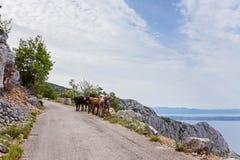 Mucche sulla strada della montagna Immagini Stock