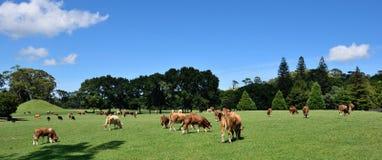 Mucche in un campo fotografia stock
