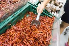 Mucchi dei peperoncini rossi rossi secchi con il merlo acquaiolo di alluminio nel mA eccellente Fotografie Stock Libere da Diritti