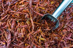 Mucchi dei peperoncini rossi rossi secchi con il merlo acquaiolo di alluminio nel mA eccellente Fotografia Stock Libera da Diritti