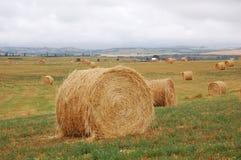 Mucchi della paglia nel campo di autunno Fotografie Stock