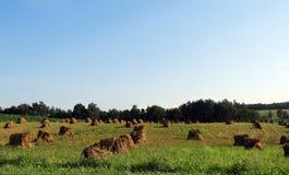 Mucchi della pila del fieno di Amish nel campo dopo il raccolto fotografia stock