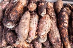 Mucchi delle radici appena raccolte della tapioca Fotografia Stock Libera da Diritti