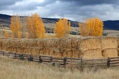 Mucchi di fieno della valle di Nicola, Columbia Britannica Immagini Stock
