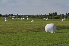 Mucchi di fieno imballati nell'imballaggio di plastica bianco Fotografia Stock