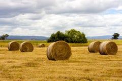 Mucchi di fieno maturi di grano, Australia occidentale fotografia stock libera da diritti