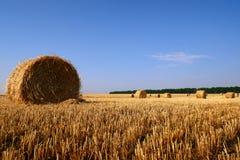 Mucchi di fieno nel campo di autunno, rurale Immagini Stock