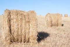 Mucchi di fieno nel campo in estate Fotografia Stock