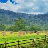 Mucchi di fieno nella valle della montagna Immagini Stock