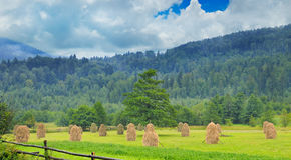 Mucchi di fieno nella valle della montagna Fotografie Stock Libere da Diritti