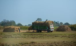 Mucchi di fieno nepalesi dei carichi dei lavoratori sul camion Fotografia Stock Libera da Diritti