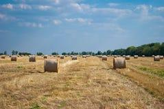 Mucchi di fieno rotondi su un campo di paglia, un giorno di estate soleggiato, contro un fondo del cielo e degli alberi Immagine Stock