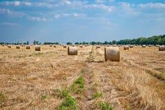 Mucchi di fieno rotondi su un campo di paglia, un giorno di estate soleggiato, contro un fondo del cielo e degli alberi Fotografia Stock