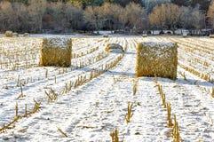 Mucchi di fieno sul campo congelato Immagini Stock